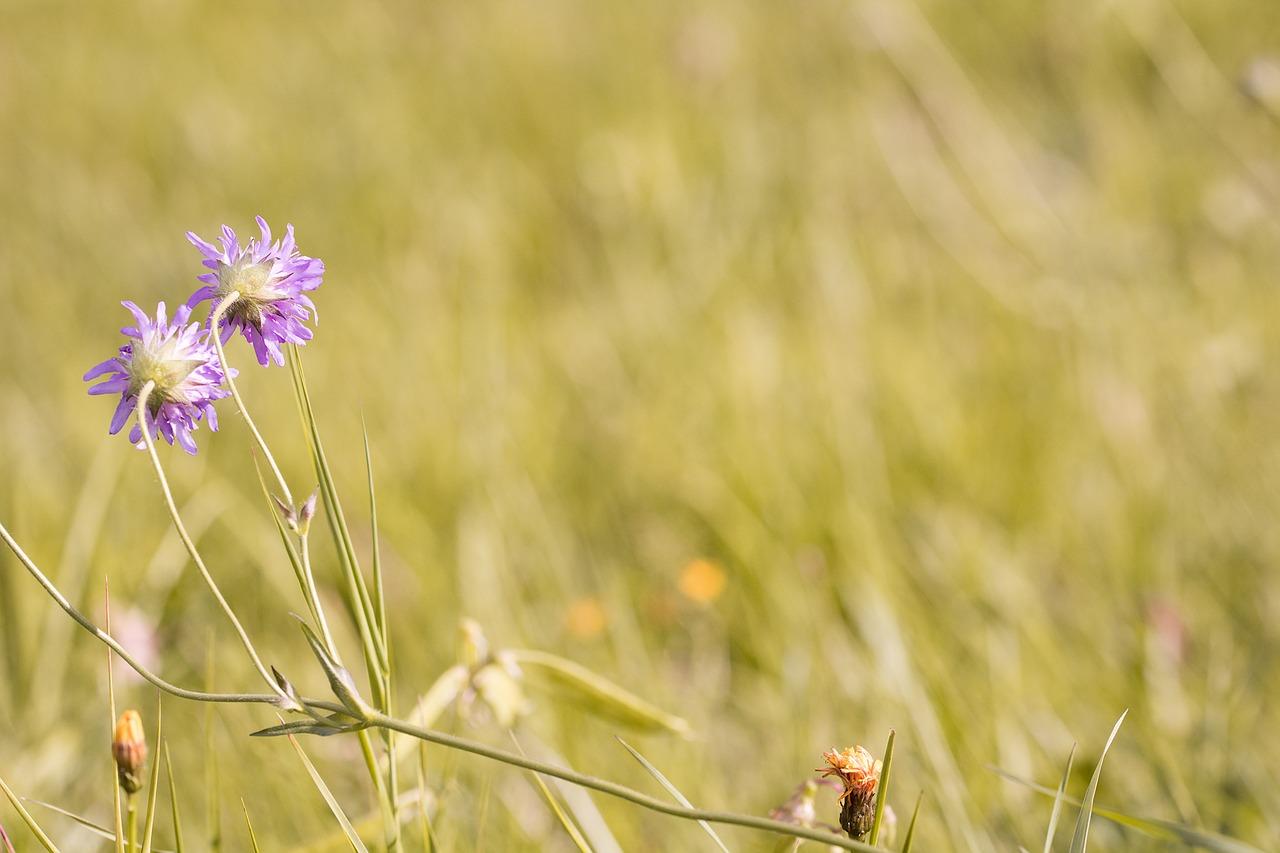 meadow-1662639_1280