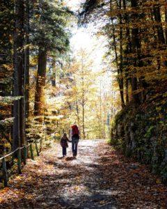autumn-1021322_1920